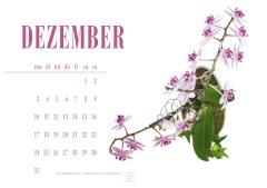 flower-2816143_1920